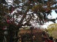 kyotomarason2014_3.JPG